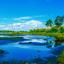 zomers landschap bij Kampina