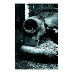 Car Graveyard (6)