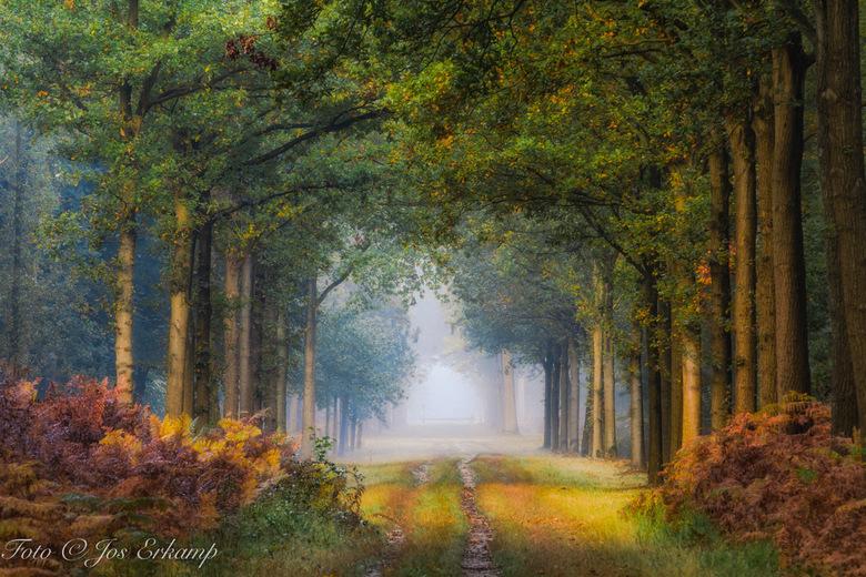Het pad...........................in het Liesbos