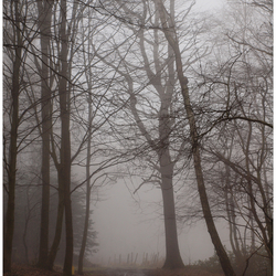 Een mistige ochtend in Limburg