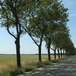 Bomen schaduw zon