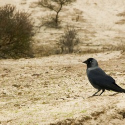 Bird on Dutch dunes
