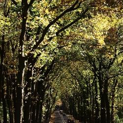 bomen tunnel….