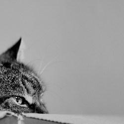 De kat in de doos 2