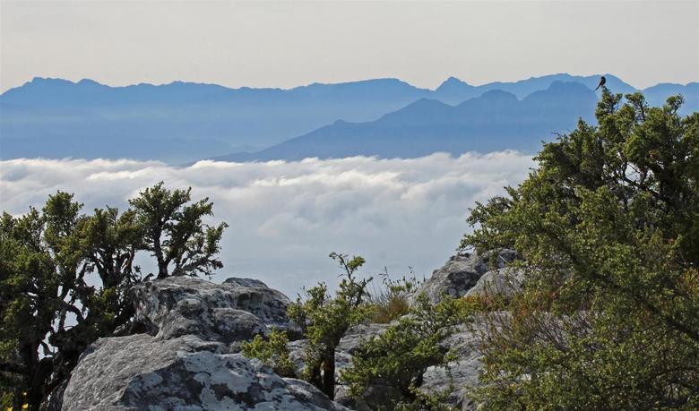 wolken om de Tafelberg - Als je geluk hebt, zoals wij hadden, kun je naar de Tafelberg. Boven waait het hard en het ene moment is alles helder en het
