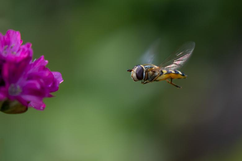 Approaching - Approaching pink flower