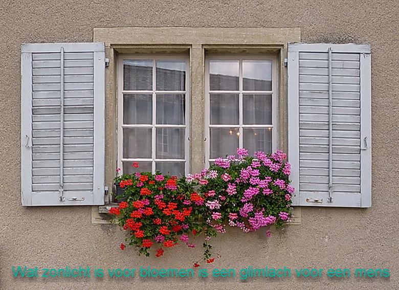 Zomaar. - Zomaar een raam met bloemen bij Schaffhausen Zwitserland.<br /> 27 augustus 2014.<br /> Groetjes Bob.