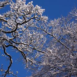 Winterse schoonheid