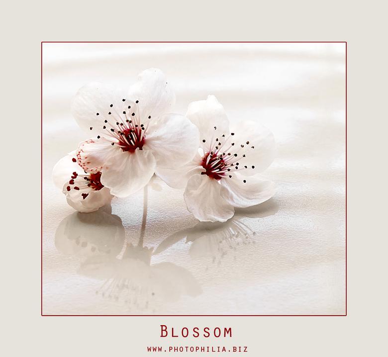 Blossom.. - Dag mensen, even een bloemetje tussendoor, met dit prachtige weer moet je er snel bij zijn...De pruimen en de kersenbomen zijn het eerst a