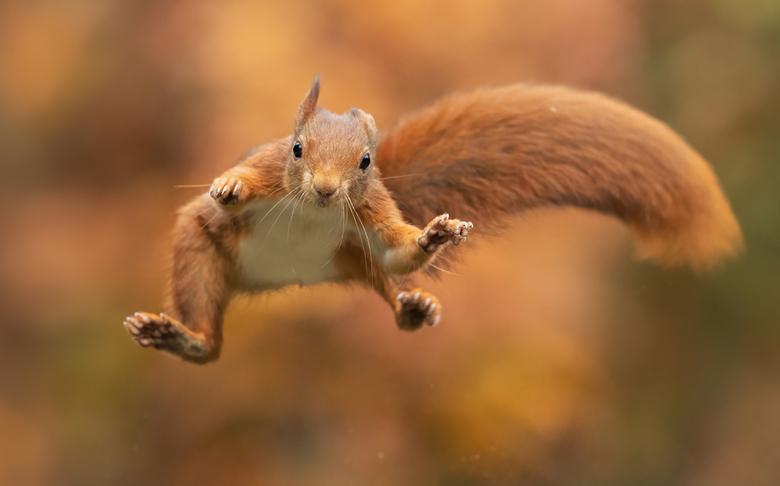 Happy days! - Heerlijk een dagje doorbrengen met deze springende eekhoorns!