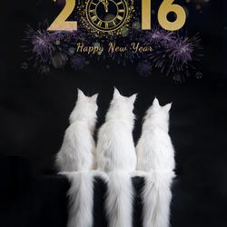 Cat'chy Nieuwjaar!!