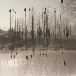 Spiegeling in de mist