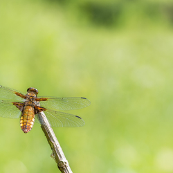 Hanging on a twig
