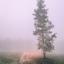 Berk in de mist