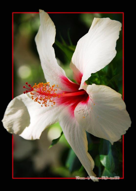 Bloempie.... - Nog een bloempie....<br /> Ik denk dat ik een nieuwe fotografie richting in ga. Jammer dat ik geen enkel idee heb wat voor bloemen ik