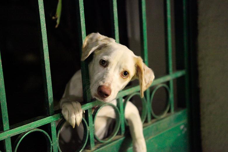 Mag ik mee?.jpg - Alle honden op t griekse eiland zijn stuk voor stuk zo blij! ook deze die stiekem door t hek stond te kijken.