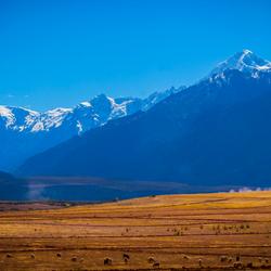 Cusco fields