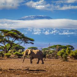 World Elephant Day!