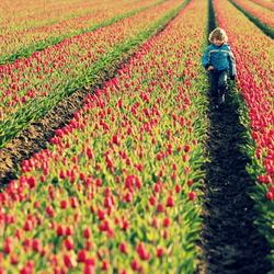 jongen in tulpenveld