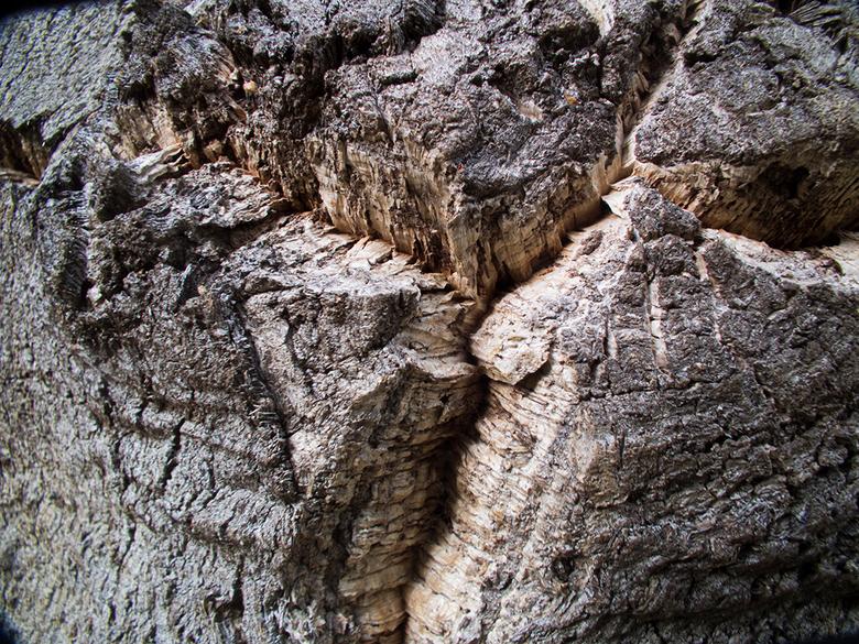 Creatief met kurk - Waarom zou je creatief doen met kurk, als de natuur zelf er al een kunststukje van gemaakt heeft?<br /> Kurkeik in Andalusië.
