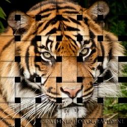 tijger ...net even anders...