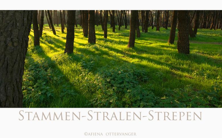 stammen-stralen-strepen - Als de laatste zonnestralen strepen tekenen in het bos.<br /> Iedereen bedankt voor de vorige reacties en een fijn weekend!
