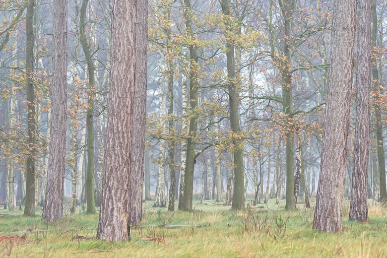 In het bos -