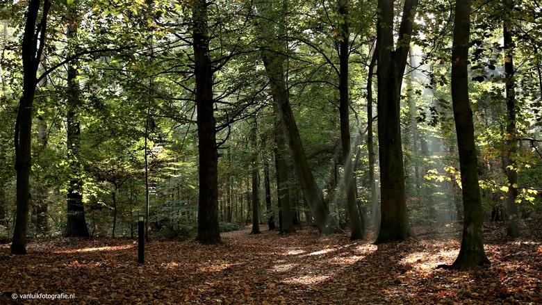 Het Bos -
