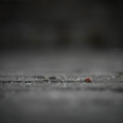 Walk the line..