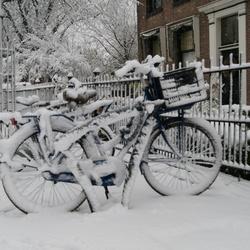 Stilleven in de sneeuw