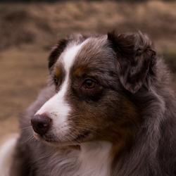 Mijn hond Noa