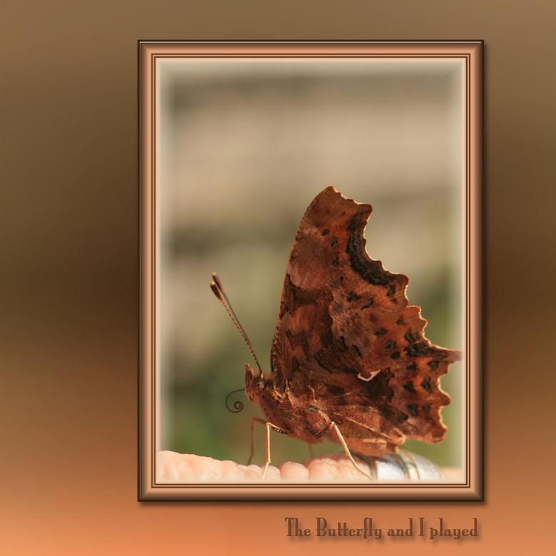The Wonder with the Butterfy  - ECHT MIJ HELE VERHAAL MOETEN JULLIE LEZEN, DIT WAS WONDERLIJK.<br /> <br /> Ik ben er weer:<br /> <br /> We zijn n