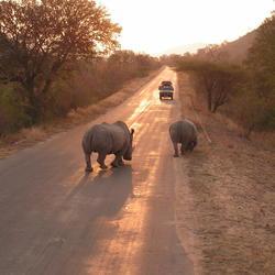 Kruger park Zuid Afrika