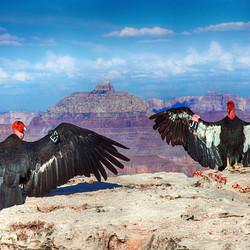 Mooi zitten op de Grand Canyon