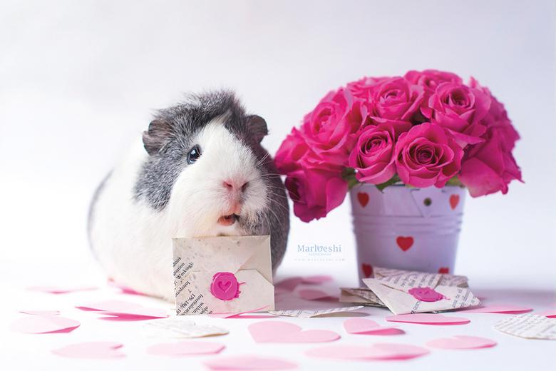 Love letter - Mieps heeft een liefdesbrief! Voor wie zou 'ie zijn?