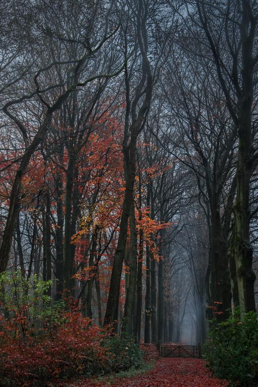 Another dark forest - Afgelopen zondag een hele gezellige dag gehad in één van de uithoeken van Nederland: Putte, vlakbij de Belgische grens. Een prac