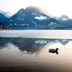 Eenden in meer