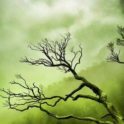 Tree vains