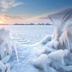 Bevroren Rietkragen