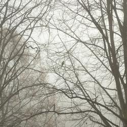Alleen in de mist