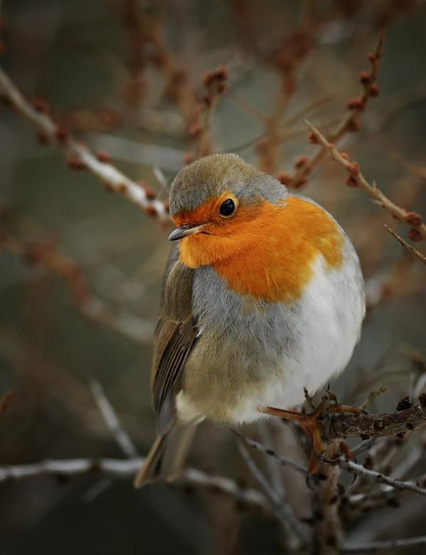 Robin - Fijn weekend vast allemaal<br /> Groet, Djurre