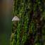 Mini Paddestoel aan een boomstam,..