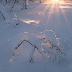 Sneeuw figuren........