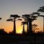 avenue des baobabs bij zonsondergang