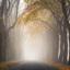 Weg in de mist met herfstkleuren