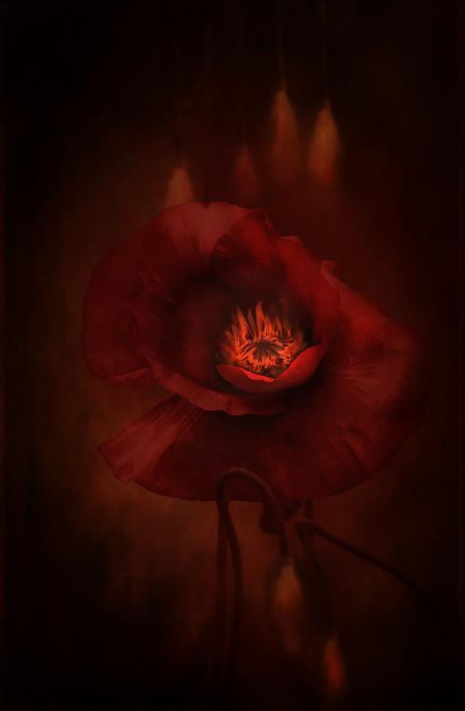 Burning Desire - Heel fijn weekend, gr. Onneke<br /> <br /> dank je wel voor jullie reakties, super !!!