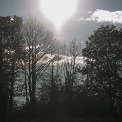 Avondzon tussen de bomen