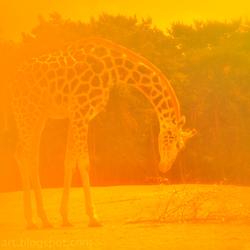 giraf SBB 5 10
