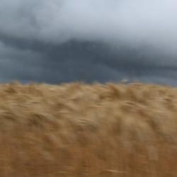in snelheid langs het graan