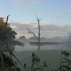 Foggy morning!!